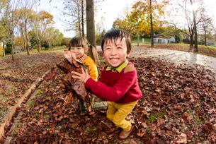 落ち葉を集めて遊ぶ女の子男の子の写真素材 [FYI01567132]