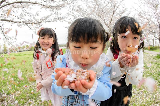 桜の花びらを吹くランドセルを背負った女の子の写真素材 [FYI01567173]