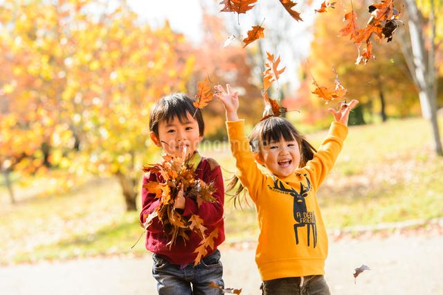 落ち葉を集めてまき散らす女の子男の子の写真素材 [FYI01567266]