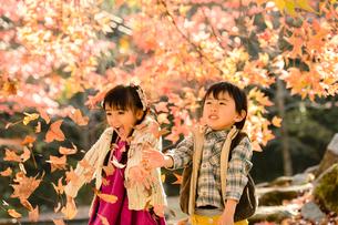 落ち葉を集めてまき散らす女の子男の子の写真素材 [FYI01567276]
