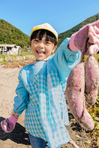 掘ったさつまいもを見せる女の子の写真素材 [FYI01567577]