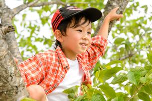 公園の木に登る男の子の写真素材 [FYI01567594]