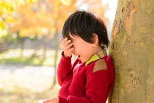 木にもたれる男の子の写真素材 [FYI01567636]