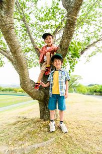 公園の木の前でポーズをとる男の子の写真素材 [FYI01567957]