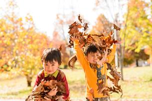 落ち葉を集めてまき散らす女の子男の子の写真素材 [FYI01567968]
