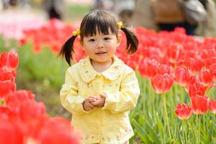 春の公園でチューリップ畑で遊ぶ女の子の写真素材 [FYI01568035]