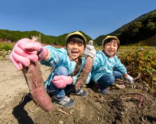 掘ったさつまいもを見せる女の子と男の子の写真素材 [FYI01568147]