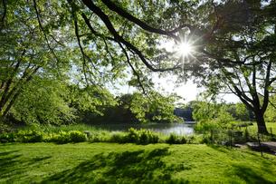 セントラルパーク新緑と芝生と太陽の写真素材 [FYI01568204]