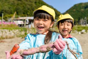 掘ったさつまいもを見せる女の子と男の子の写真素材 [FYI01568334]