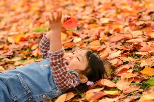 落ち葉の上に寝転がる女の子の写真素材 [FYI01568438]