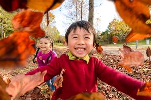 落ち葉を集めて遊ぶ女の子男の子の写真素材 [FYI01568673]