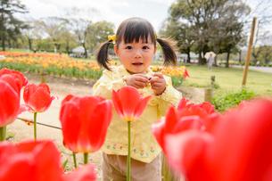 春の公園でチューリップ畑で遊ぶ女の子の写真素材 [FYI01568721]