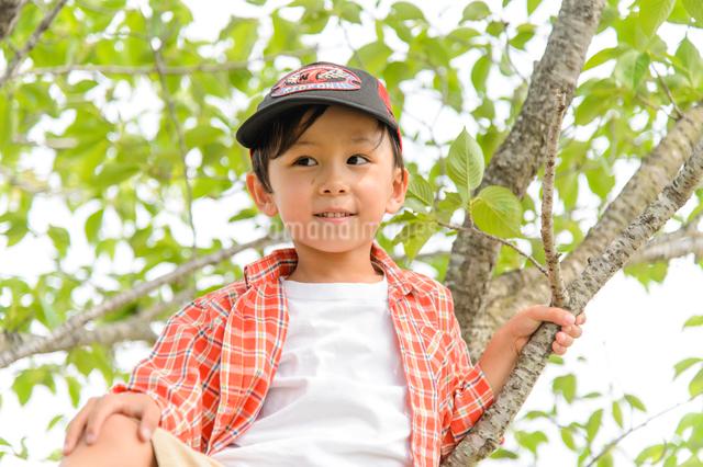 公園の木に登る男の子の写真素材 [FYI01568852]
