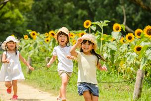 ヒマワリ畑の女の子の写真素材 [FYI01568974]