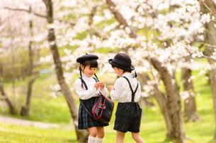 桜の木の前で向かい合って立つ女の子と男の子の写真素材 [FYI01569077]