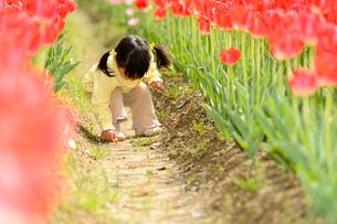 春の公園でチューリップ畑で遊ぶ女の子の写真素材 [FYI01569235]