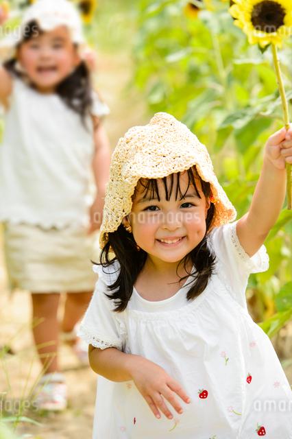 ひまわり畑の中を歩く女の子の写真素材 [FYI01569426]