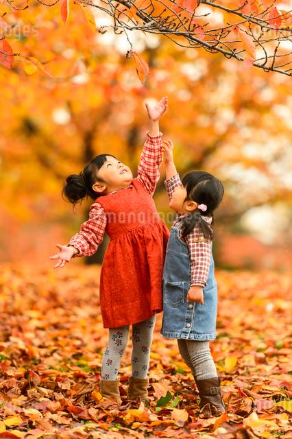 紅葉の公園で遊ぶ子どもの写真素材 [FYI01569428]