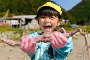 掘ったさつまいもを見せる女の子の写真素材 [FYI01569448]