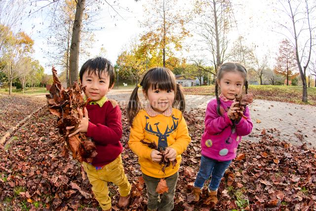 落ち葉を集めて遊ぶ女の子男の子の写真素材 [FYI01569462]