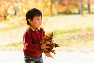 落ち葉を集めて持つ男の子の写真素材 [FYI01569527]
