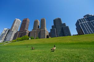 アッパーウエストサイド再開発高層住宅群と芝生と雁の写真素材 [FYI01569757]