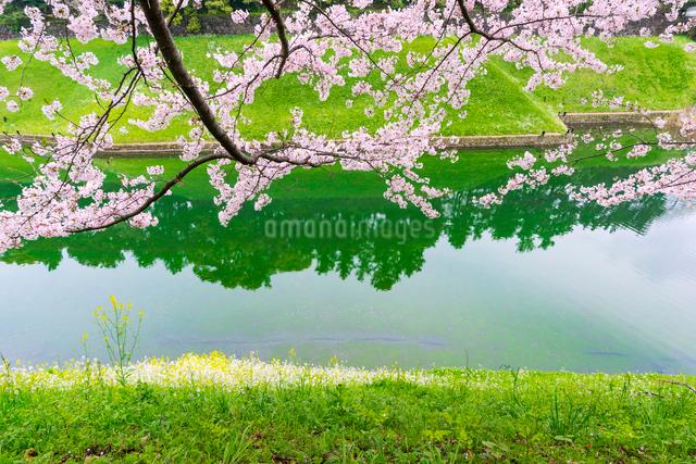皇居のお堀に映る木々と桜の木の写真素材 [FYI01569923]