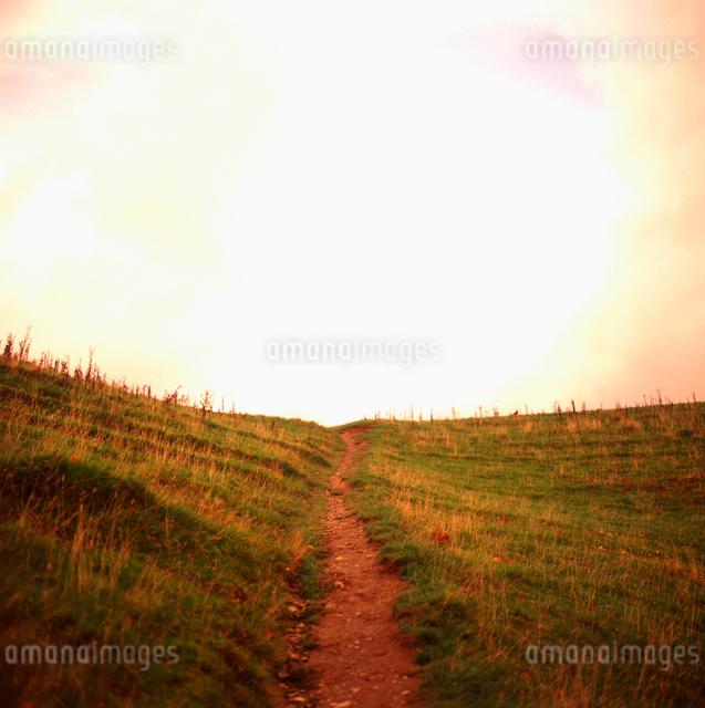 草原の1本道 イギリスの写真素材 [FYI01570535]