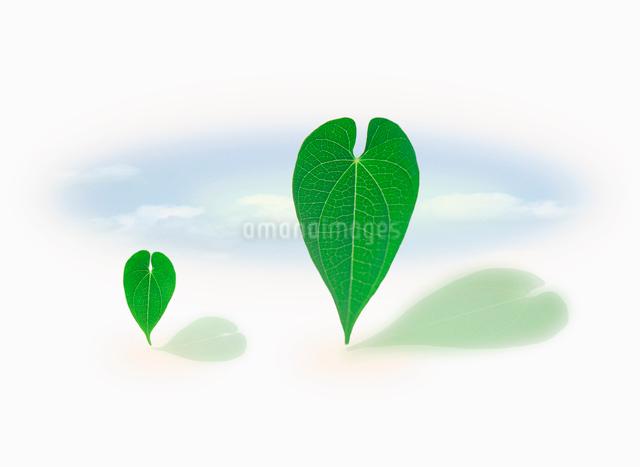 大小2枚の葉のイラスト素材 [FYI01570610]