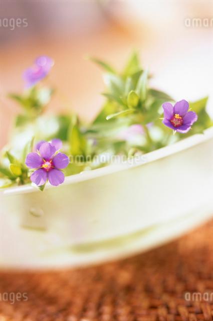 花の写真素材 [FYI01570629]