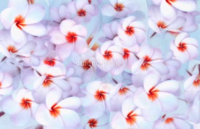 花のパターンの写真素材 [FYI01570713]