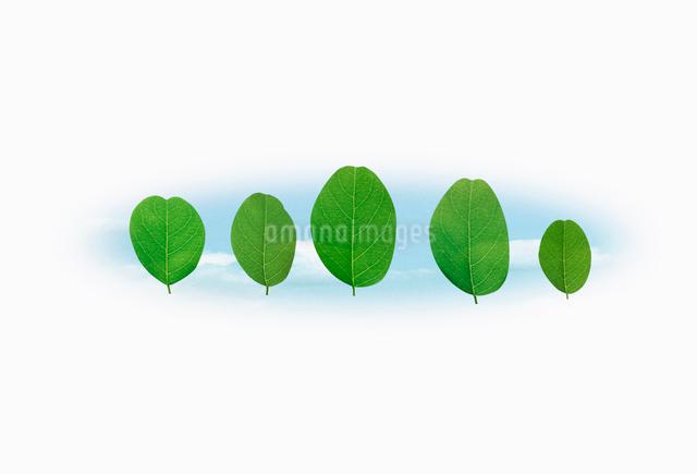 並ぶ5枚の葉のイラスト素材 [FYI01570768]