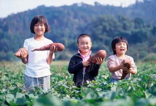 サツマイモを持って畑に立つ日本人の子供の写真素材 [FYI01570932]