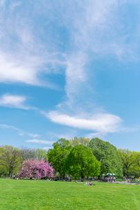 セントラルパーク グレートローン新緑の中に咲く桜の木の写真素材 [FYI01570985]