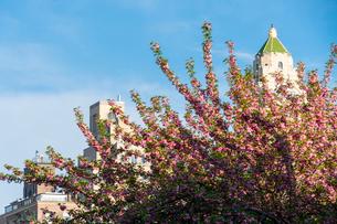 セントラルパークの八重桜とセントラルパークイーストの高級住宅。の写真素材 [FYI01571180]