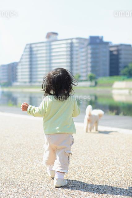 犬を追いかける女の子の後姿の写真素材 [FYI01571227]