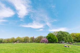 セントラルパーク グレートローン新緑の中に咲く桜の木の写真素材 [FYI01571305]