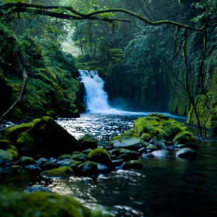 渓流と苔むした岩の写真素材 [FYI01571538]