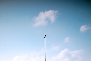 青空と雲と照明灯の写真素材 [FYI01571773]