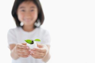 植物を手に持った日本人の女の子の手元の写真素材 [FYI01572355]