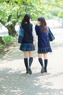 並木道を歩く2人の日本人女子高生の写真素材 [FYI01573225]
