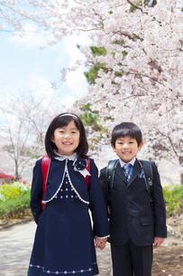 桜並木に立つ小学1年生の男女の写真素材 [FYI01573366]