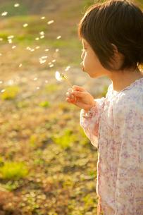 タンポポに息を吹く女の子の写真素材 [FYI01573464]
