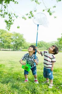 虫取りをして遊ぶ日本人兄弟の写真素材 [FYI01573474]