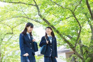 新緑の並木を歩く2人の女子高生の写真素材 [FYI01573648]