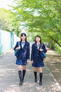 新緑の並木道を歩く2人の女子高生の写真素材 [FYI01573757]