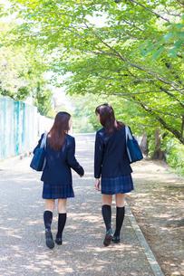 新緑の並木道を歩く2人の女子高生の写真素材 [FYI01573764]