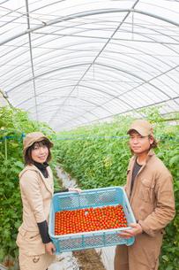収穫したミニトマトのカゴを持つ男女の写真素材 [FYI01573954]