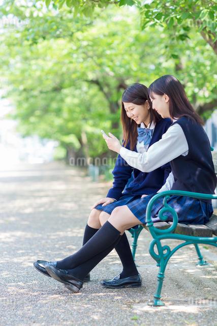 ベンチに座り携帯を見る2人の女子高生の写真素材 [FYI01574280]