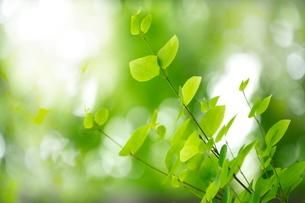新緑の写真素材 [FYI01576722]